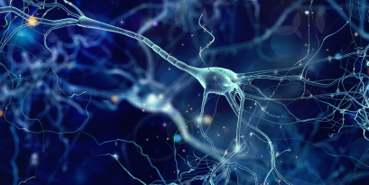 Neurons are connected through synapses to form a memory.